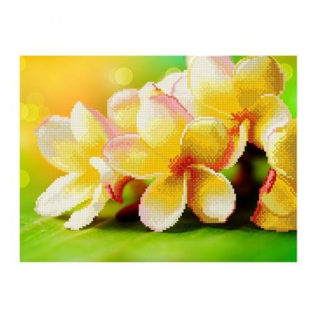 Картины мозаикой Molly арт.EZD007 Частичная Выкладка Цветы Яблони (28 Цветов) 30х40 см