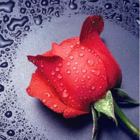 Набор для изготовления картин 'АЛМАЗНАЯ ЖИВОПИСЬ' арт.АЖ.014 'Красная роза' 22х24