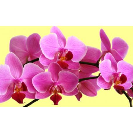 Набор алмазной живописи 'Алмазная вышивка' арт.СК-644 'Розовая орхидея' 30х50 см