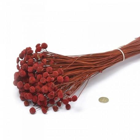 SBU.0054 Цветы 'Пуговички' цв.красный уп.100 гр