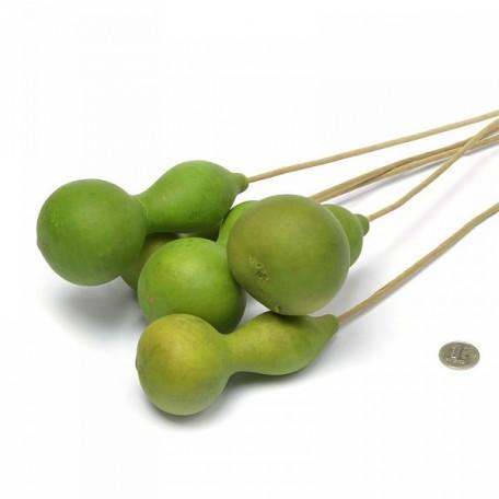 SBU.8556 Калабаш зеленый уп.5шт